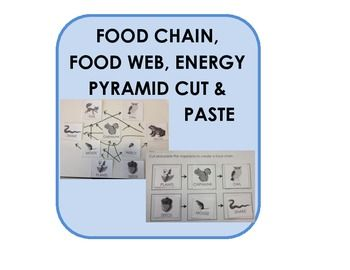 Food Chain Food Web Energy Pyramid Cut Paste Application