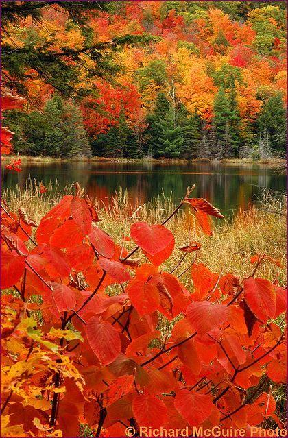 Lac Fortune, Gatineau Park, Quebec, Canada.