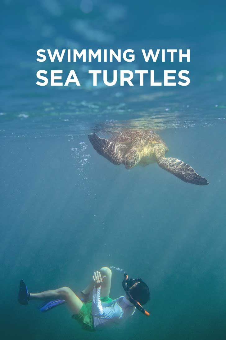 essay on endangered sea turtles Hundreds of thousands of sea turtles, whales, and other marine mammals, and  more than 1 million seabirds die each year from ocean pollution and ingestion or .