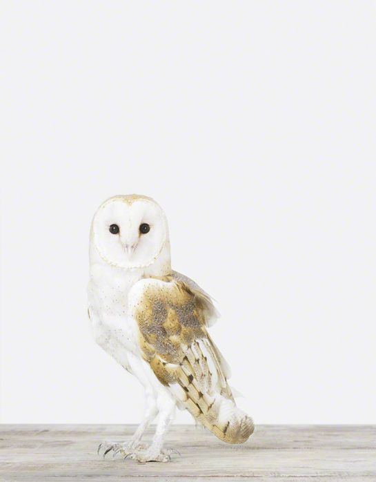 Menagerie: Sharon Montrose's Evocative, Minimalist Portraits of Animals   Brain Pickings