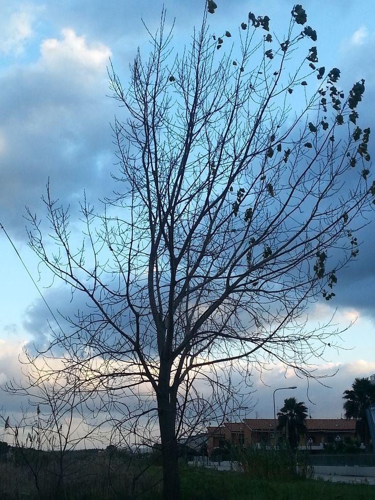 albero, Campomarino (CB) sullo sfondo.