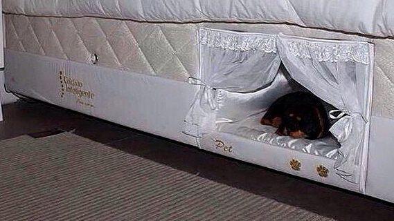 Niche pour chien incastrée dans un lit  tête de lit