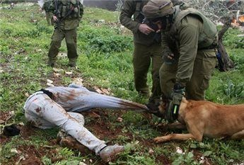 Watch: Israeli soldiers urge dogs to attack Palestinian child | Maan News Agency