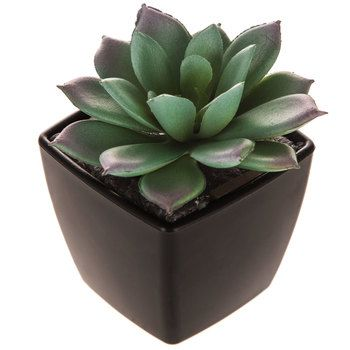 Small Square Succulent – Products