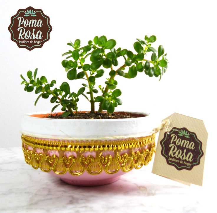 Lleva a tu hogar esta hermosa planta de Jade que trae la prosperidad y la buena energía a tu vida!