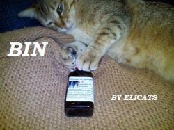 Silicio organico cane gatto | http://elicats.it/silicio-organico-cane-gatto/