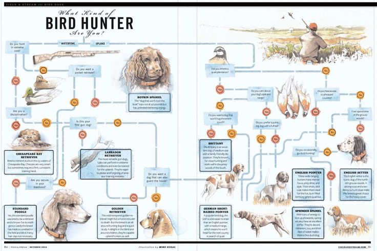 What Kind Of Bird Hunter Are You? [INFOGRAPHIC]