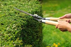 Get Trusted Local Garden Maintenance Service near rodney in New Zealand. only at Pacific Property Services.