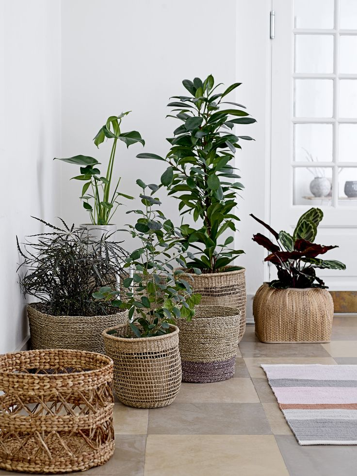 Baskets are perfectly used for plants indoor <3 Design by Bloomingville