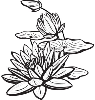 Sketch of lotus flowers vector by Wikki33 - Image #619892 ...