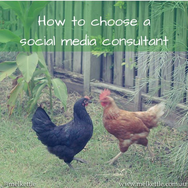 "Are you overwhelmed by all the #socialmedia ""experts""? Ask these questions before hiring http://blog.melkettle.com.au/2015/07/how-to-choose-a-social-media-consultant/?utm_content=bufferc6643&utm_medium=social&utm_source=pinterest.com&utm_campaign=buffer"