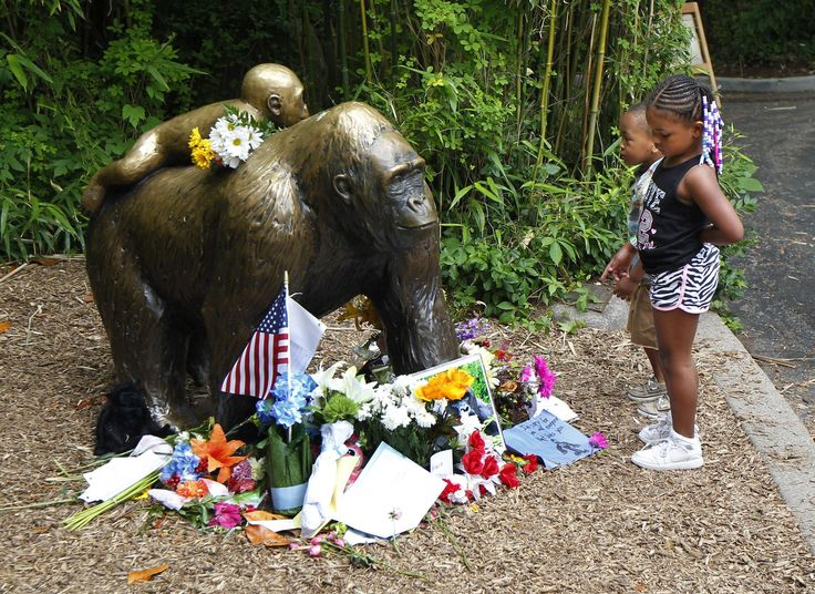 Stop talking about Harambe, our dead gorilla, zoo pleads -   People should stop making memes and jokes about Harambe, the gorilla that was shot after a child fell in his enclosure, according to the Cincinnati ...