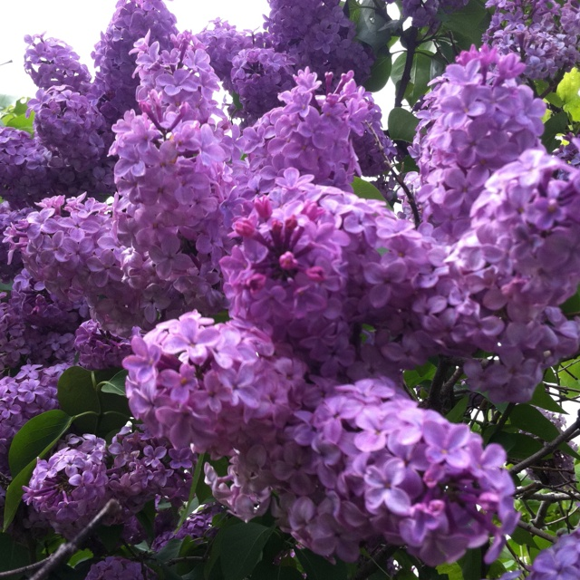 7 Best Smelling Flowers That Bloom In The Evening. Resolution ...