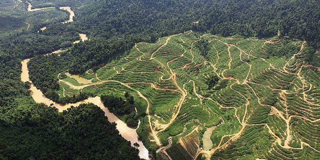 """Investor Brunei menyiapkan dana sekitar Rp 3 triliun untuk mengakuisisi sejumlah perusahaan perkebunan kelapa sawit di Indonesia. Akuisisi itu akan dilakukan dengan skema take over, pembelian langsung, atau kerjasama dengan mitra lokal. """"Nilai take over minimal satu perusahaan bisa mencapai Rp 300 miliar. Kami juga sudah berkoordinasi dengan Gabungan Pengusaha Kelapa Sawit Indonesia (Gapki),"""" kata sumber duniaindustri.com yang"""