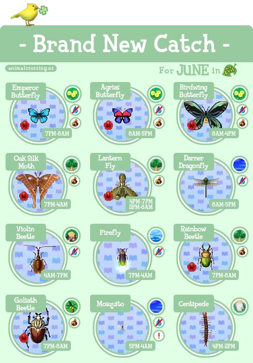 Acnl brand new catch june animal crossing pinterest for Acnl fish guide