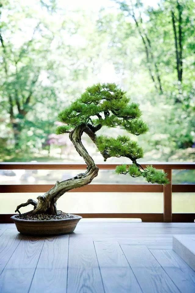 A tiny bonsai tree as a patio decoration adds a contemporary, yet traditional feel to your home or patio.