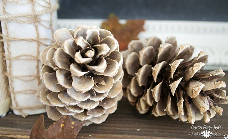 If you haven't bleached your pine cones yet, here's why you should!