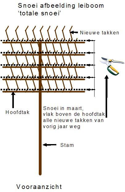 leilinde en leiplataan snoeien totale snoei.bmp (406×625)