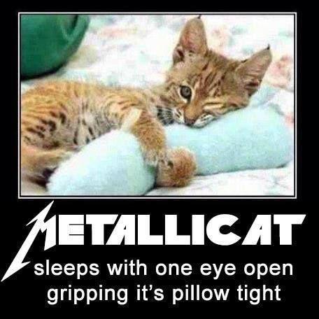 Metallica Metallicat Sleeps With One Eye Open Gripping