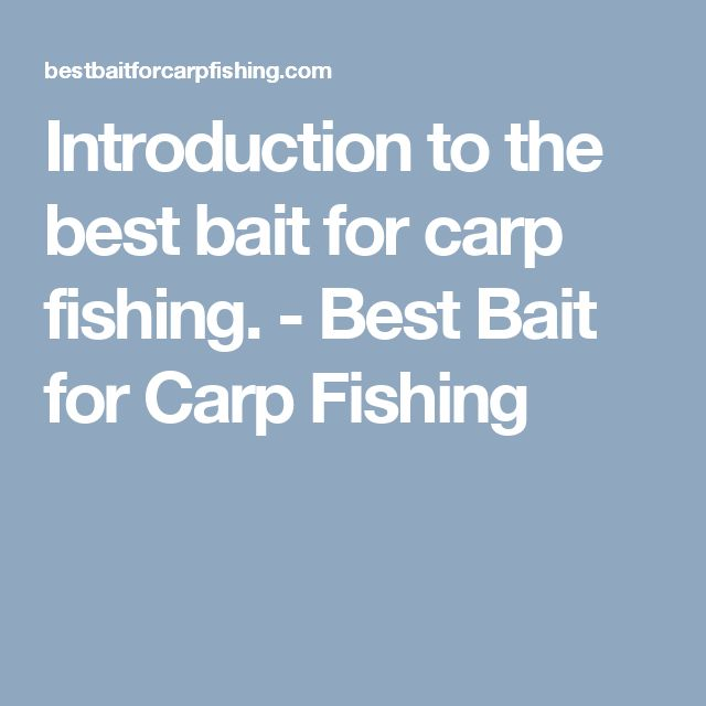 Introduction to the best bait for carp fishing. - Best Bait for Carp Fishing