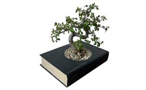Bonsai tree and an old book
