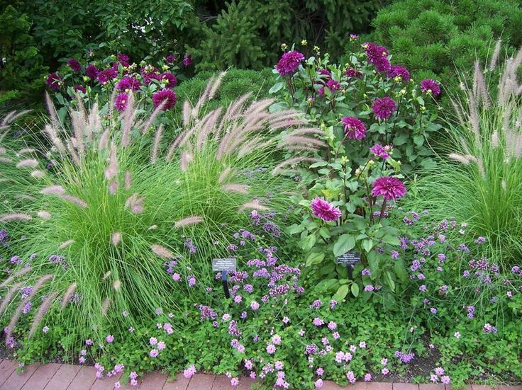 proven winners basic design principles using color in the garden in how to plant garden design home gardens and learn - Garden Design Using Grasses
