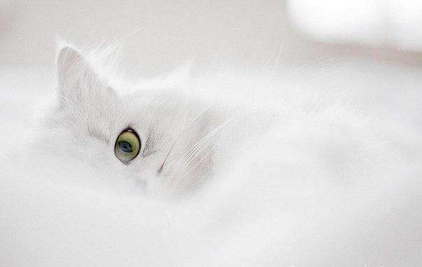 .: Animals, Kitten, Cat Eyes, Pet, White Cats, White, Catssss White, Kitty, Friend