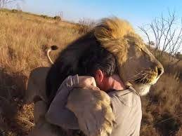 Resultado de imagen para lions