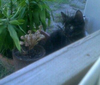 Pixie in the garden