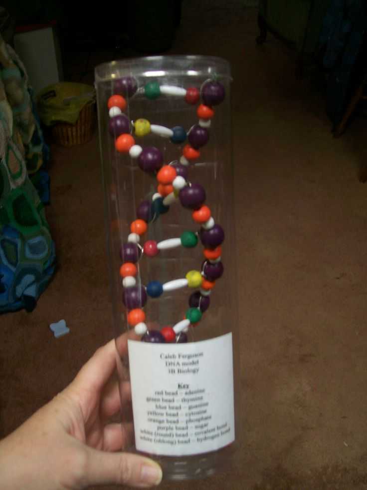 Model DNA made from beads and floral wire fit perfectly into the sonic screwdriver container.