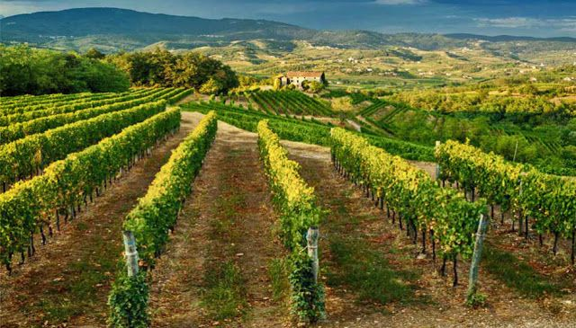 From Italy with Wine: From Italy with Wine - Collio wine zone