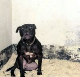 Will the Lennox Tragedy impact Breed Specific Legislation in your community? » DogHeirs | Where Dogs Are Family « Keywords: BSL, Lennox, Northern Ireland, breed specific legislation