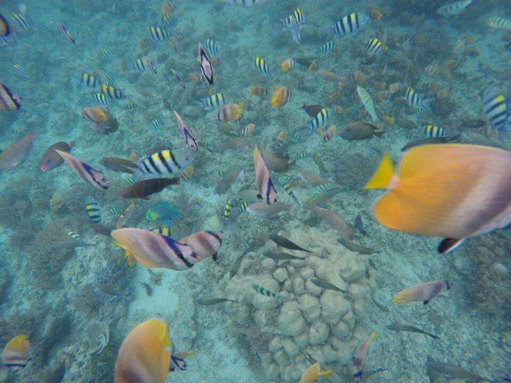 Snorkling time - Lombok
