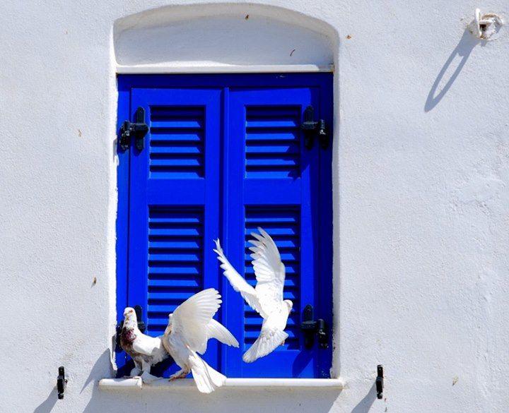 Άσπρο περιστέρι μεσ' τη συννεφιάμου `δωσες το χέρι να `χω συντροφιάάσπρο περιστέρι μαύρο μου φτερόκάθε καλοκαίρι θα σε καρτερώ  Τήνος ~καλοκαιρινάφτερουγίσματα Tinos Island ~ summerflutterings photo by Dimitris Sotiropoulos