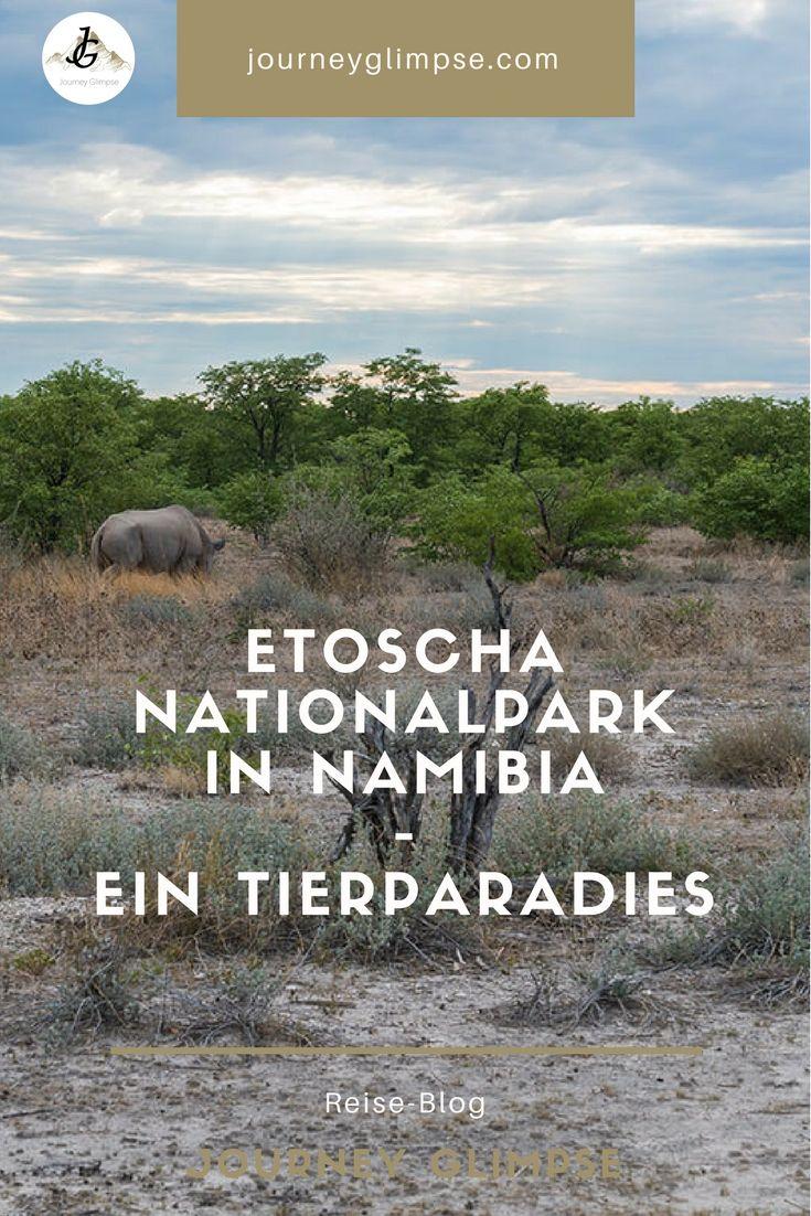Der Etoscha Nationalpark ist ein wahres Paradies für Tierfreunde. Der Park im Norden Namibias lädt für längere Touren ein. Im Blog geben wir Tipps für den Besuch.
