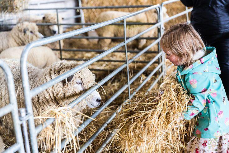 Organic Sheep