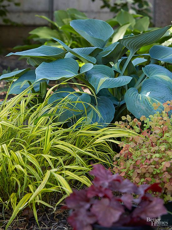 Keep the pests and bugs away from your hosta leaves with our pro-gardener tips! If you notice holes in your hosta leaves, the likely cause is slugs. Use our tips to get rid of these pests so your hostas thrive!