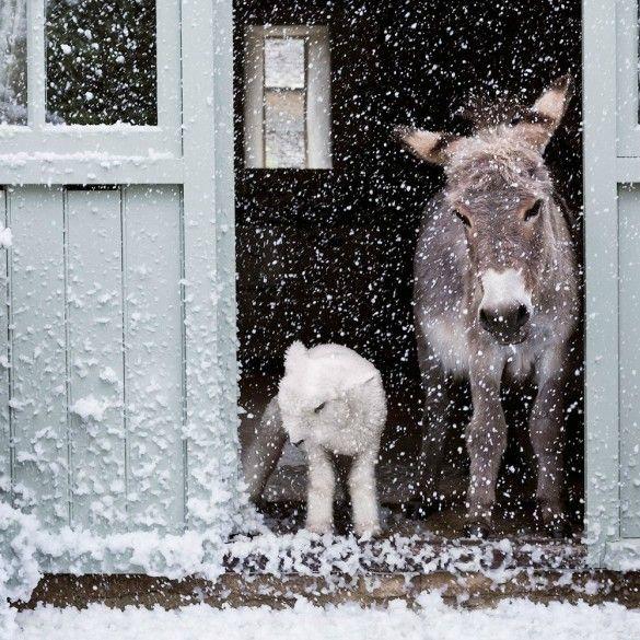 Winter Wonderland | Vois-tu petit ...