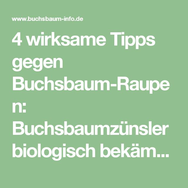 4 wirksame Tipps gegen Buchsbaum-Raupen: Buchsbaumzünsler biologisch bekämpfen – Aktuelle Informationen zum Buchsbaumzünsler 2017