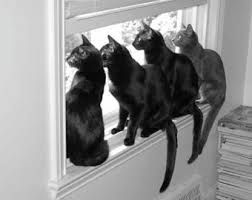 cats sitting in a window