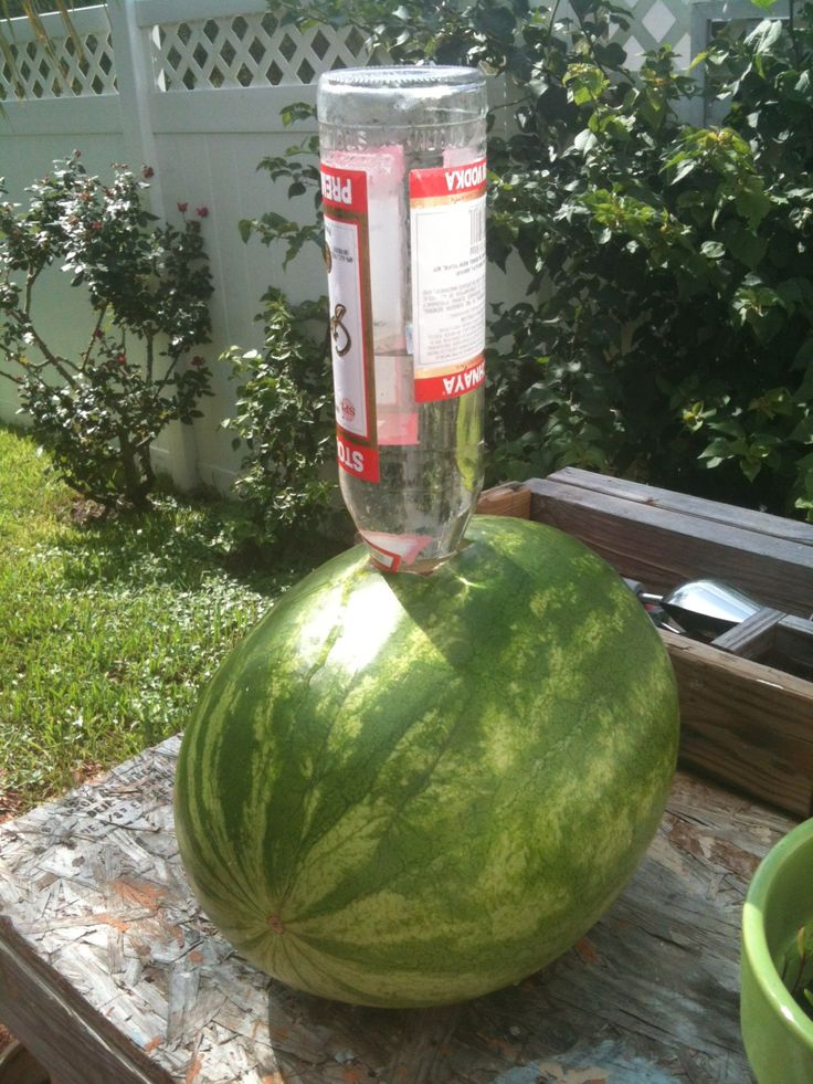 "Okay, this is just too wild to pass up: Vodka-soaked watermelon aka ""Drunken Watermelon""! Cut a hole into the top of a large watermelon, put a 1.14-liter bottle of vodka into the hole, and let it soak into the watermelon overnight. Cut the top off the watermelon and enjoy!"