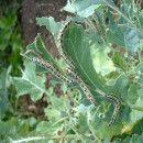 Control de plagas y enfermedades: 26 remedios ecológicos ecoagricultor.com