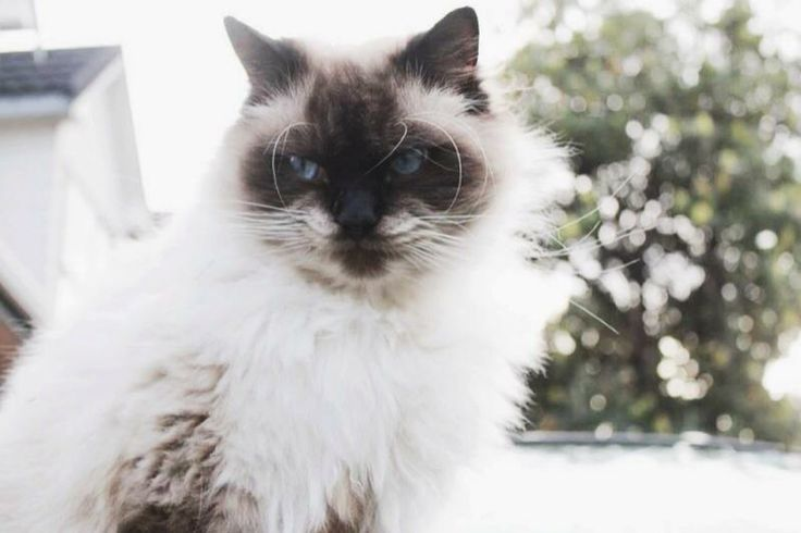 cats are beautiful
