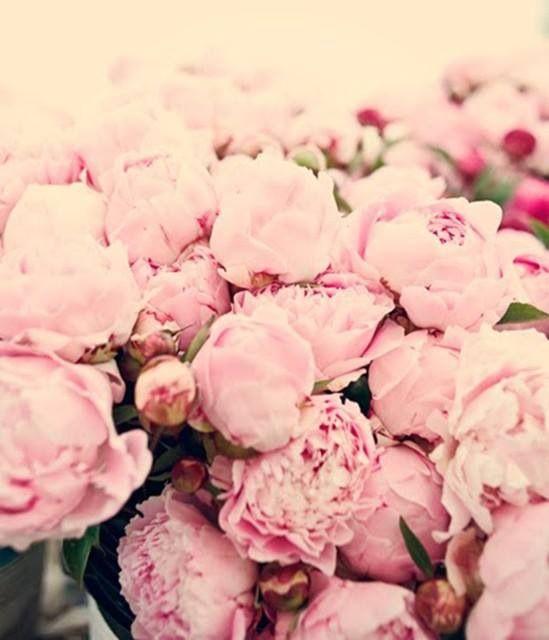 Bouquet De Pivoines Trending Pastels Pinterest Pink