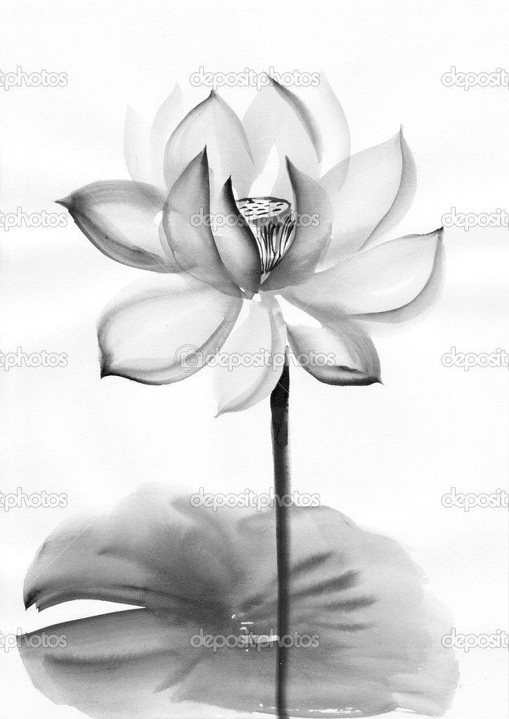 Акварельная живопись цветок лотоса - Стоковое изображение: 13914709