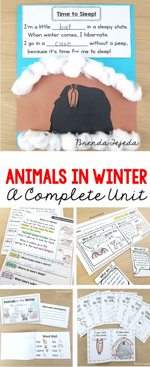 Complete unit on animal adaptation, including lesson plans for hibernation, camouflage, migration, storing food, and other forms of winter adaptation. Centers, reading passages, math activities, science demonstrations, writing centers, crafts, mini-books, and more! Perfect for kindergarten, first grade and second grade. #animalsinwinter #animaladaptation #firstgrade
