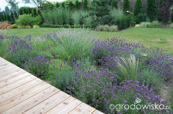 Ogród zmyślony - strona 188 - Forum ogrodnicze - Ogrodowisko