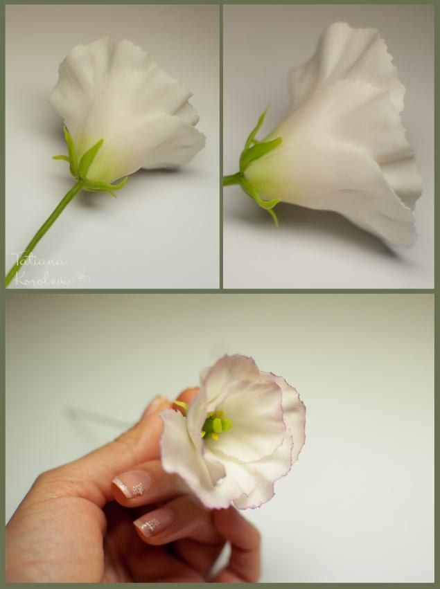 Эустома (лизиантус) « Керамическая флористика. Цветы из холодного фарфора. Уроки и мастер-классы