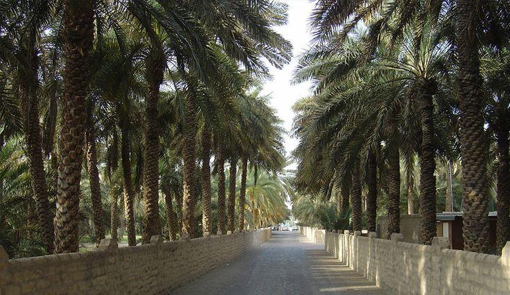 Al Ain Oasis Tour - Desert Rose Tourism, Abu Dhabi, UAE