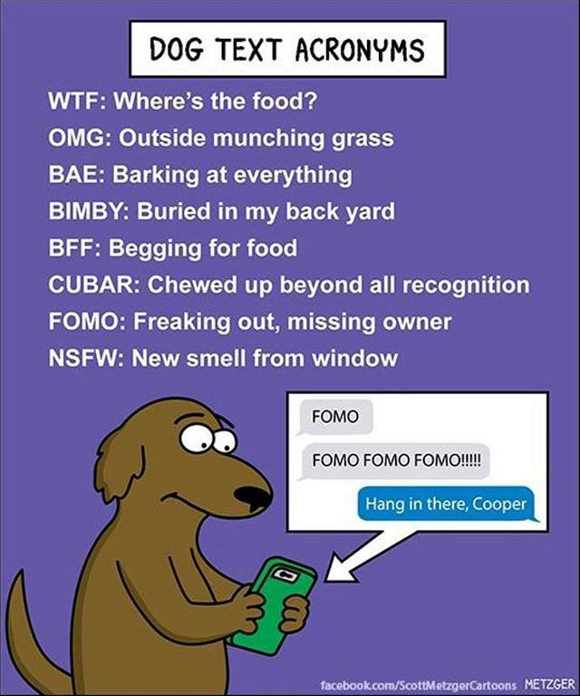 A Little Fun To Start Your Day These Dog Text Acronyms Are So On